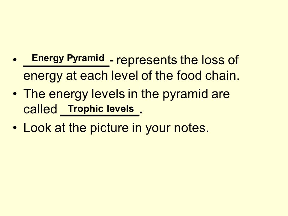 ____________- represents the loss of energy at each level of the food chain.