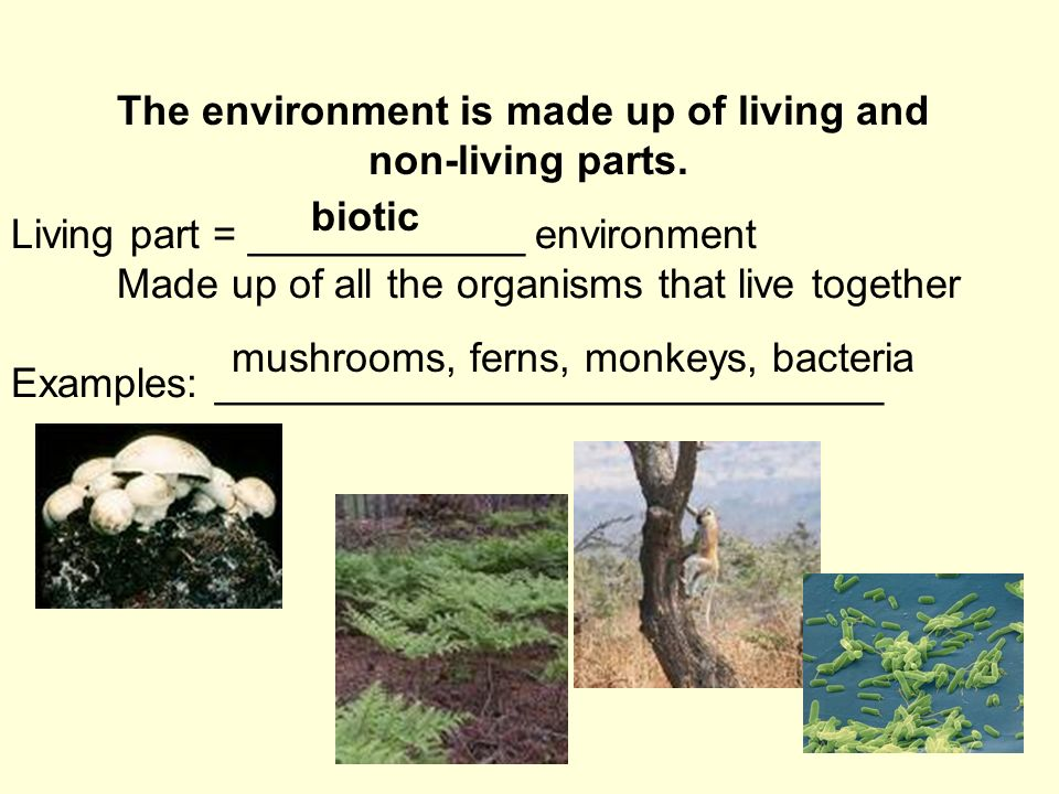 Living part = ____________ environment Made up of all the organisms that live together Examples: _____________________________ The environment is made up of living and non-living parts.