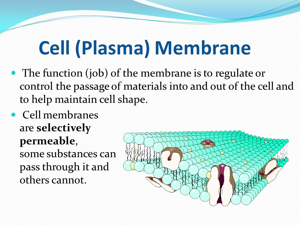 """Structure and Function of Cells"""" Lisa Michelek. The Cell Theory 1 ..."""