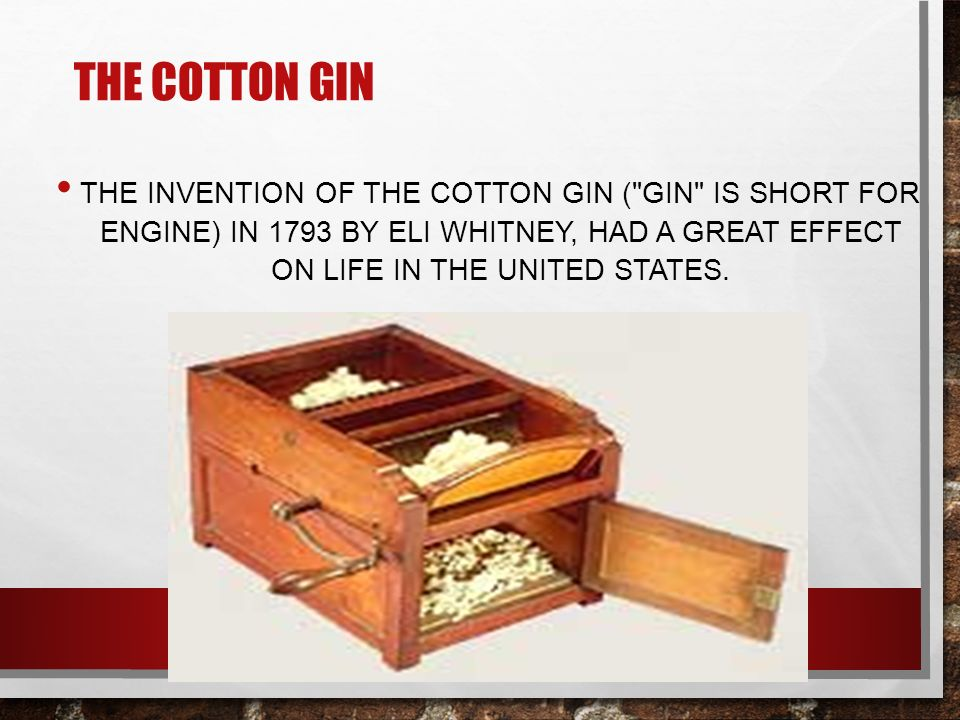 THE COTTON GIN THE INVENTION OF THE COTTON GIN ( GIN IS SHORT FOR ENGINE) IN 1793 BY ELI WHITNEY, HAD A GREAT EFFECT ON LIFE IN THE UNITED STATES.