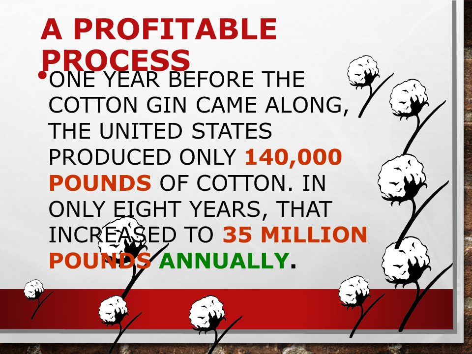 A PROFITABLE PROCESS ONE YEAR BEFORE THE COTTON GIN CAME ALONG, THE UNITED STATES PRODUCED ONLY 140,000 POUNDS OF COTTON.