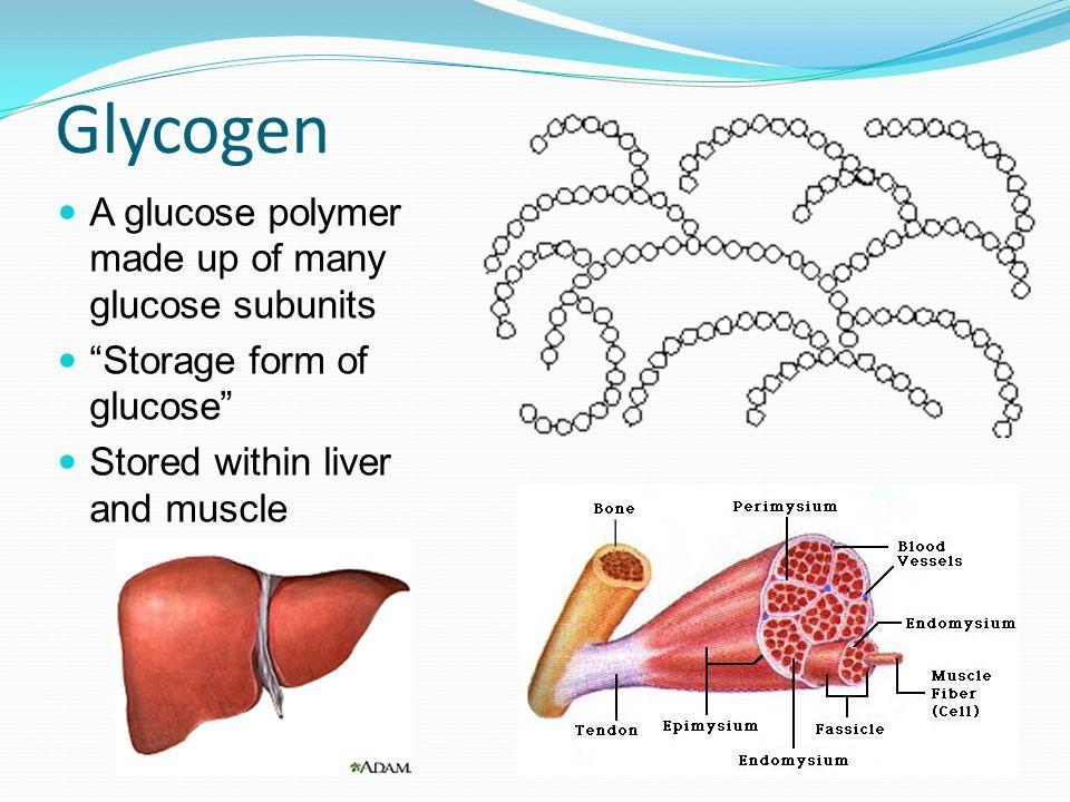 7 Glycogen A Glucose