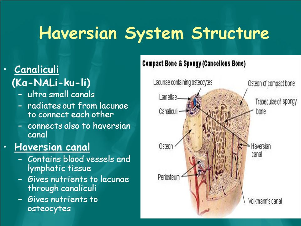 Skeletal System: Tissue and physiology Skeletal tissue is the most ...