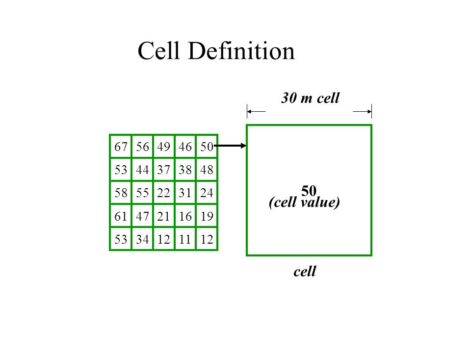 m cell cell (cell value) Cell Definition
