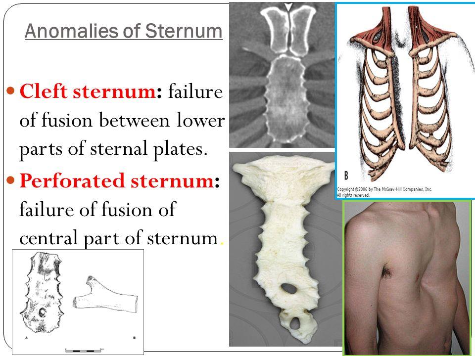 Development Of Skeletal System Limbs Dr Sama Ul Haque Dr Rania
