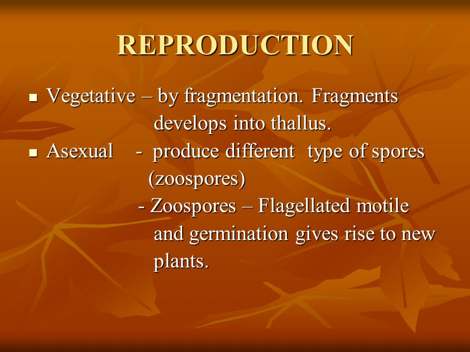 REPRODUCTION Vegetative – by fragmentation. Fragments Vegetative – by fragmentation.