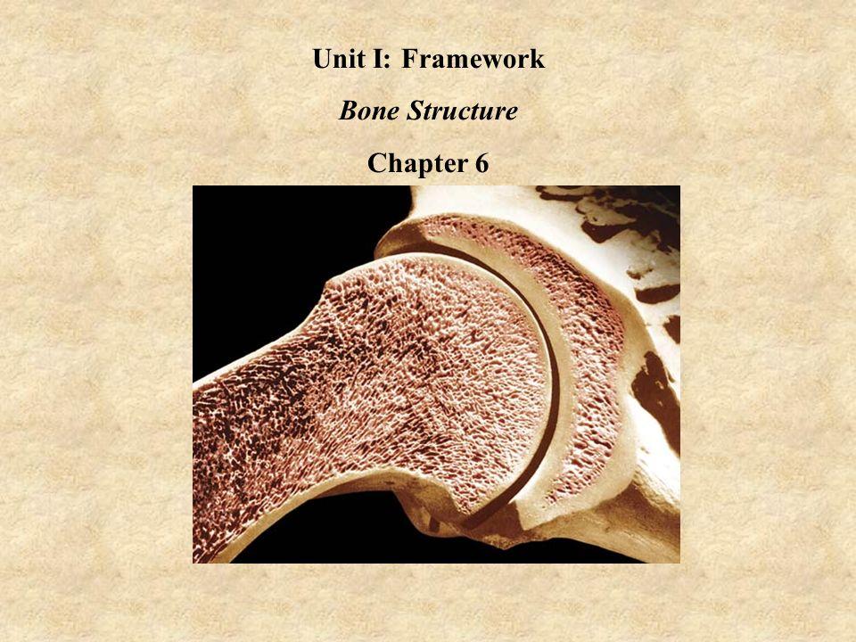 unit i: framework bone structure chapter 6. the human skeleton, Skeleton