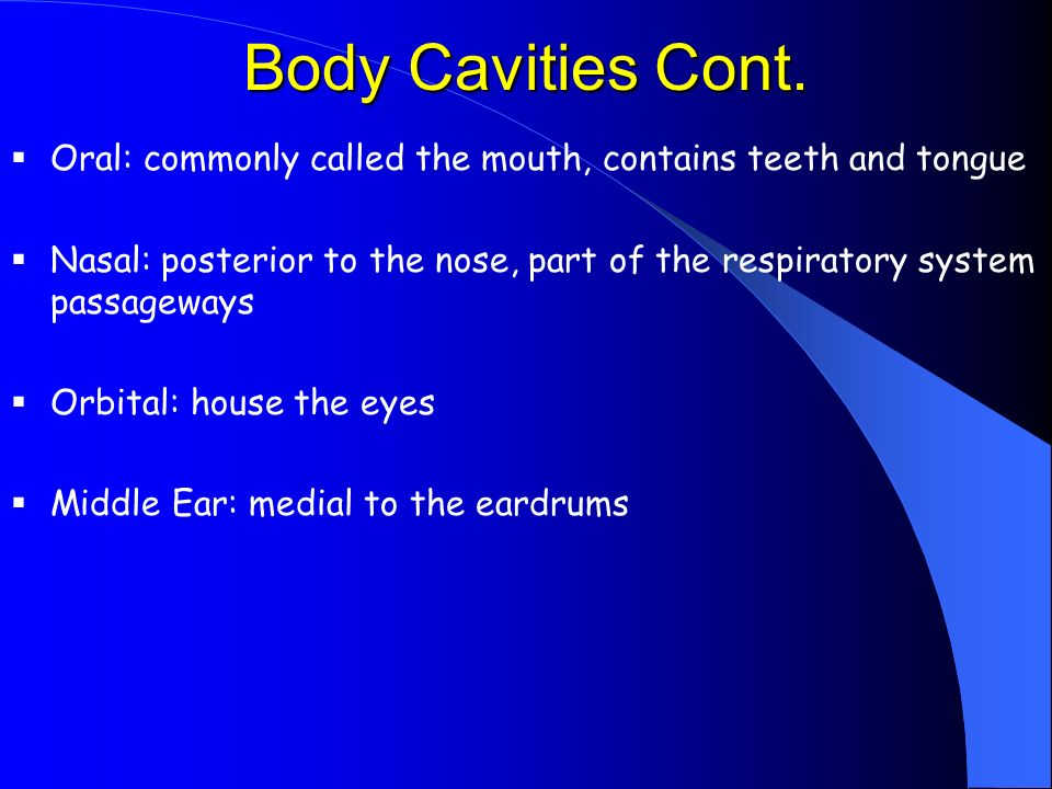 Body Cavities Cont.