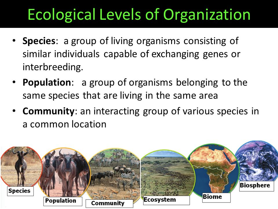 Ecological Levels of Organization Species: a group of living organisms consisting of similar individuals capable of exchanging genes or interbreeding.