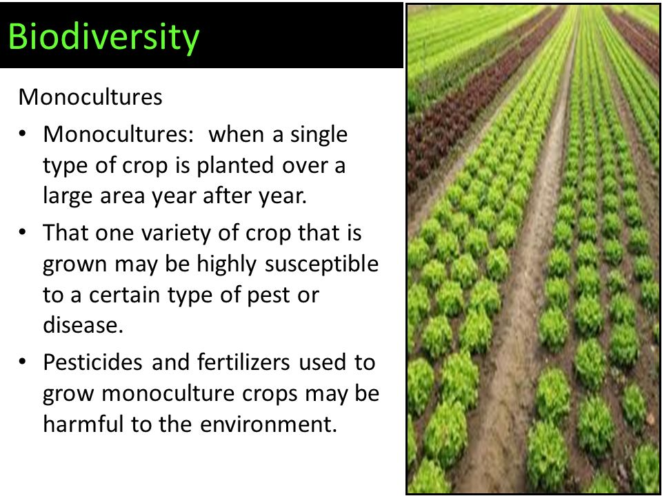 Monocultures Monocultures: when a single type of crop is planted over a large area year after year.