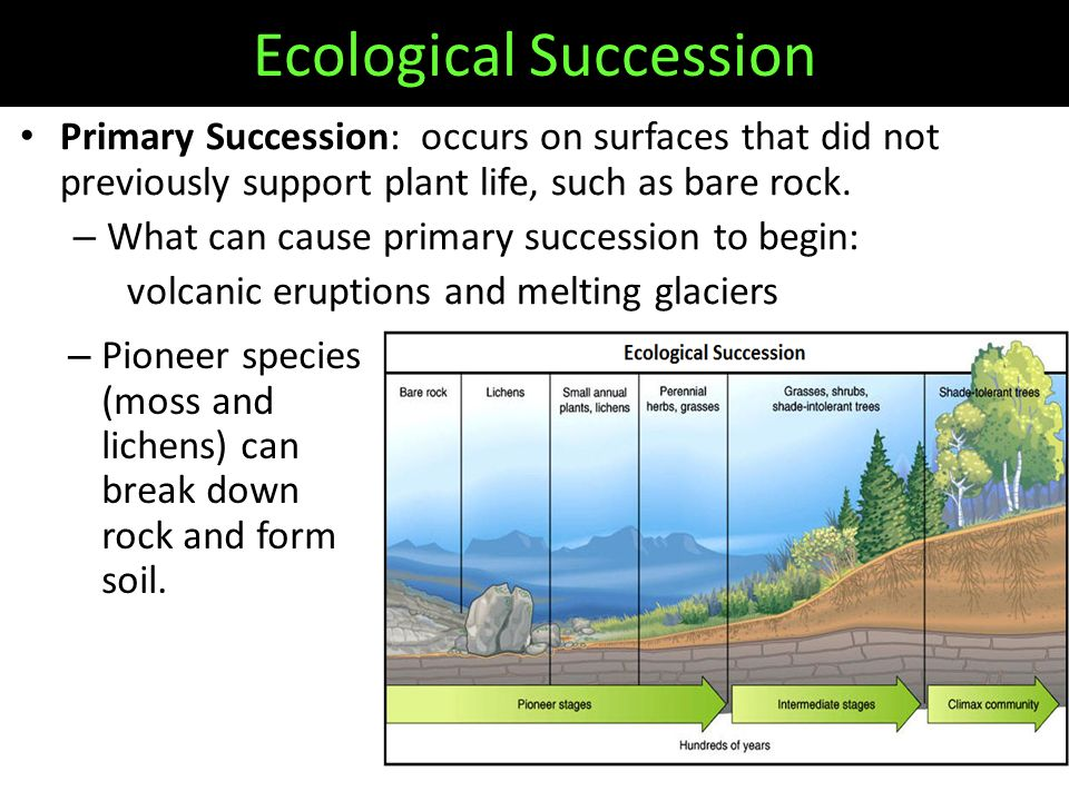 Primary Succession: occurs on surfaces that did not previously support plant life, such as bare rock.