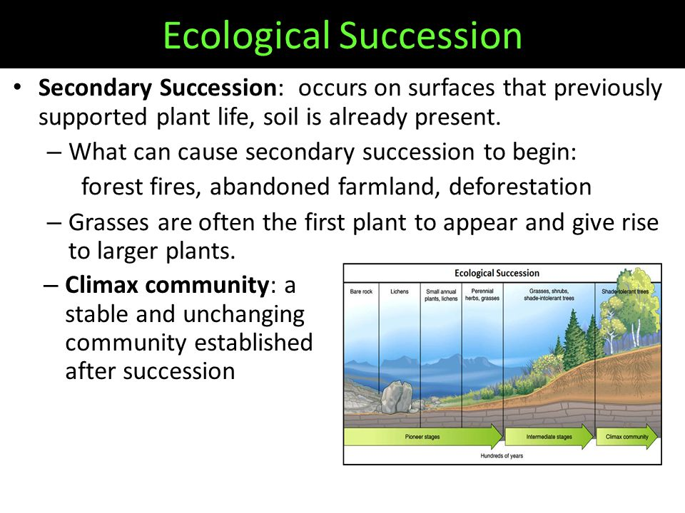 Secondary Succession: occurs on surfaces that previously supported plant life, soil is already present.