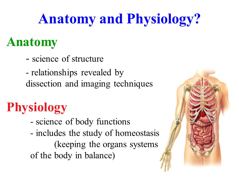 anatomy intorduction to the human body