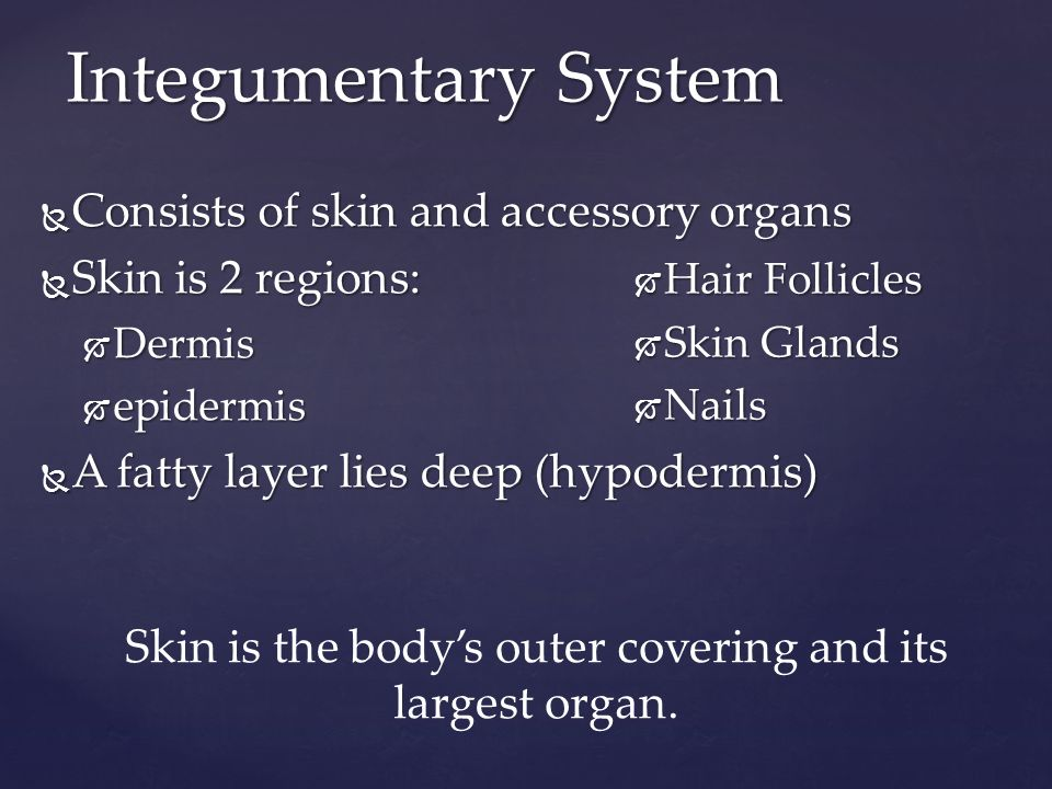 Integumentary System  Consists of skin and accessory organs  Skin is 2 regions:  Dermis  epidermis  A fatty layer lies deep (hypodermis)  Hair Follicles  Skin Glands  Nails Skin is the body's outer covering and its largest organ.