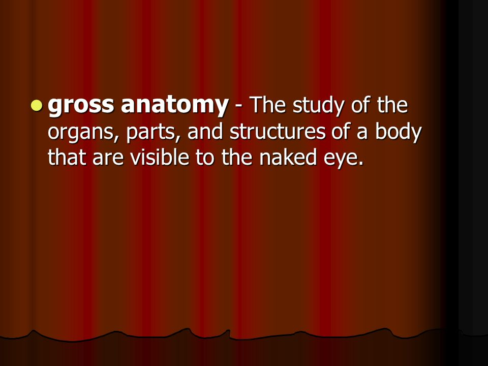 gross anatomy - The study of the organs, parts, and structures of a body that are visible to the naked eye.