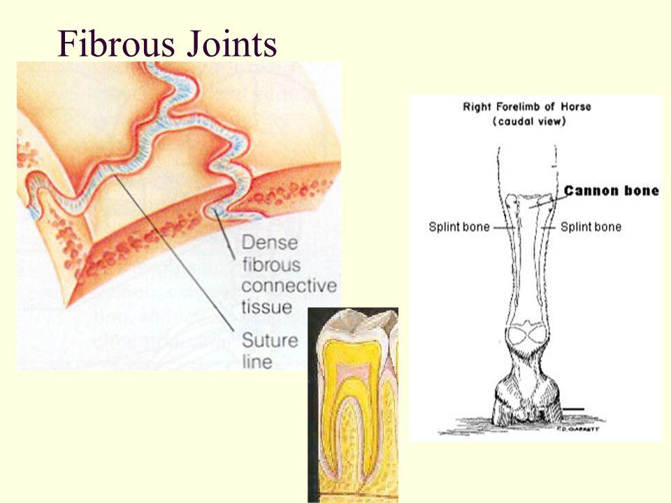 Nett Joint Anatomy And Physiology Ideen - Anatomie Ideen - finotti.info