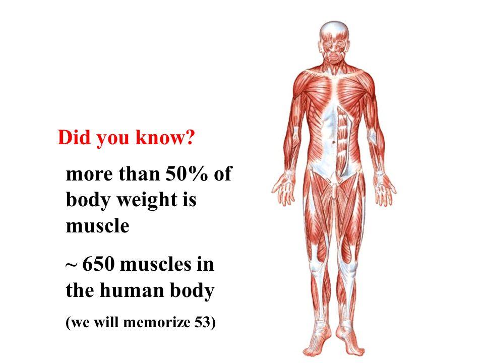 Único How To Memorize Human Anatomy Colección de Imágenes - Anatomía ...