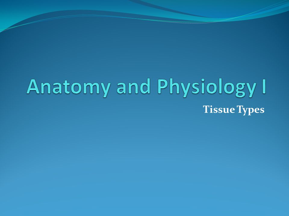 Tissue Types. GPS Standards SAP1. Students will analyze anatomical ...