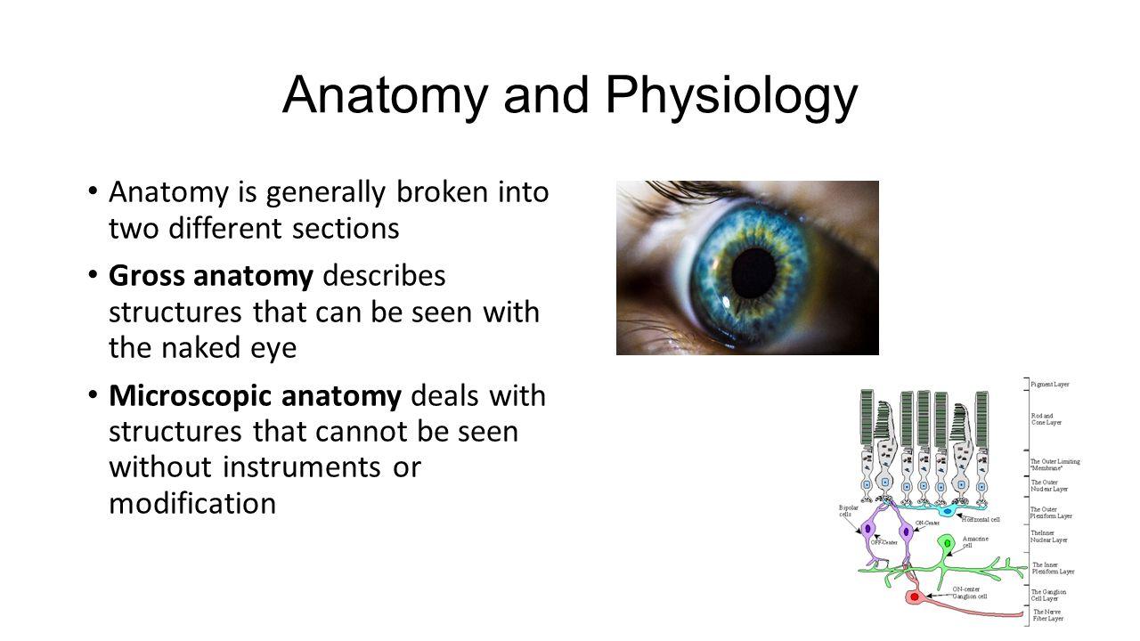 Lujoso Anatomy Deals With Bosquejo - Imágenes de Anatomía Humana ...