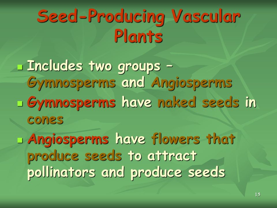 15 Seed-Producing Vascular Plants Includes two groups – Gymnosperms and Angiosperms Includes two groups – Gymnosperms and Angiosperms Gymnosperms have naked seeds in cones Gymnosperms have naked seeds in cones Angiosperms have flowers that produce seeds to attract pollinators and produce seeds Angiosperms have flowers that produce seeds to attract pollinators and produce seeds