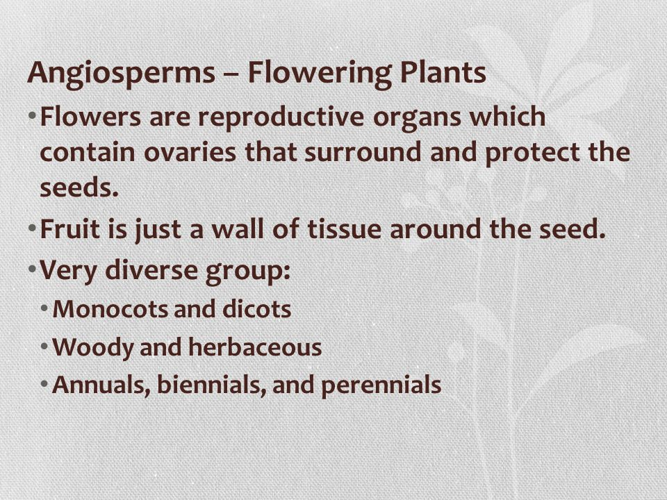 Angiosperms – Flowering Plants Flowers are reproductive organs which contain ovaries that surround and protect the seeds.