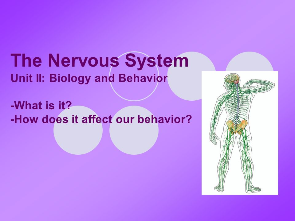 The Nervous System Unit II: Biology and Behavior -What is it -How does it affect our behavior