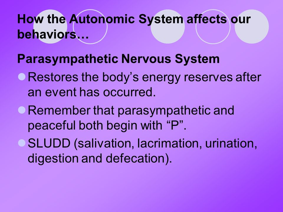 How the Autonomic System affects our behaviors… Parasympathetic Nervous System Restores the body's energy reserves after an event has occurred.
