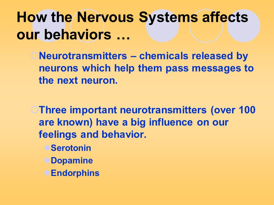 How the Nervous Systems affects our behaviors …  Neurotransmitters – chemicals released by neurons which help them pass messages to the next neuron.