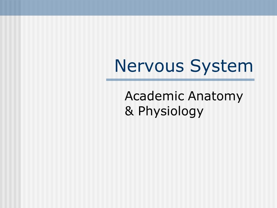 Nervous System Academic Anatomy & Physiology. The Function To act as ...