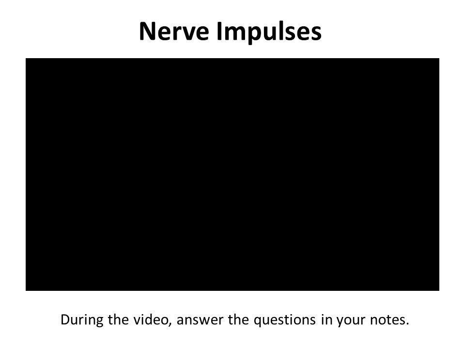 Nerve Impulses During the video, answer the questions in your notes.