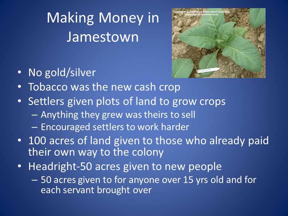 Making Money in Jamestown No gold/silver Tobacco was the new cash crop Settlers given plots of land to grow crops – Anything they grew was theirs to sell – Encouraged settlers to work harder 100 acres of land given to those who already paid their own way to the colony Headright-50 acres given to new people – 50 acres given to for anyone over 15 yrs old and for each servant brought over
