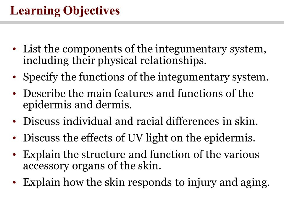 Learning Objectives List the components of the integumentary system, including their physical relationships.