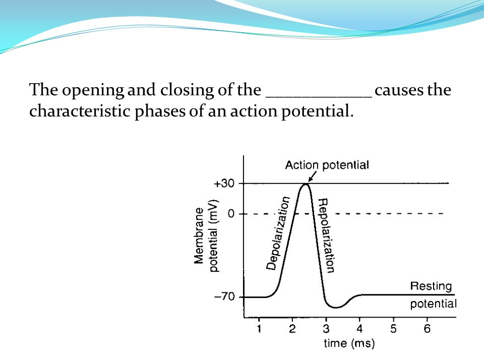 The opening and closing of the ____________ causes the characteristic phases of an action potential.