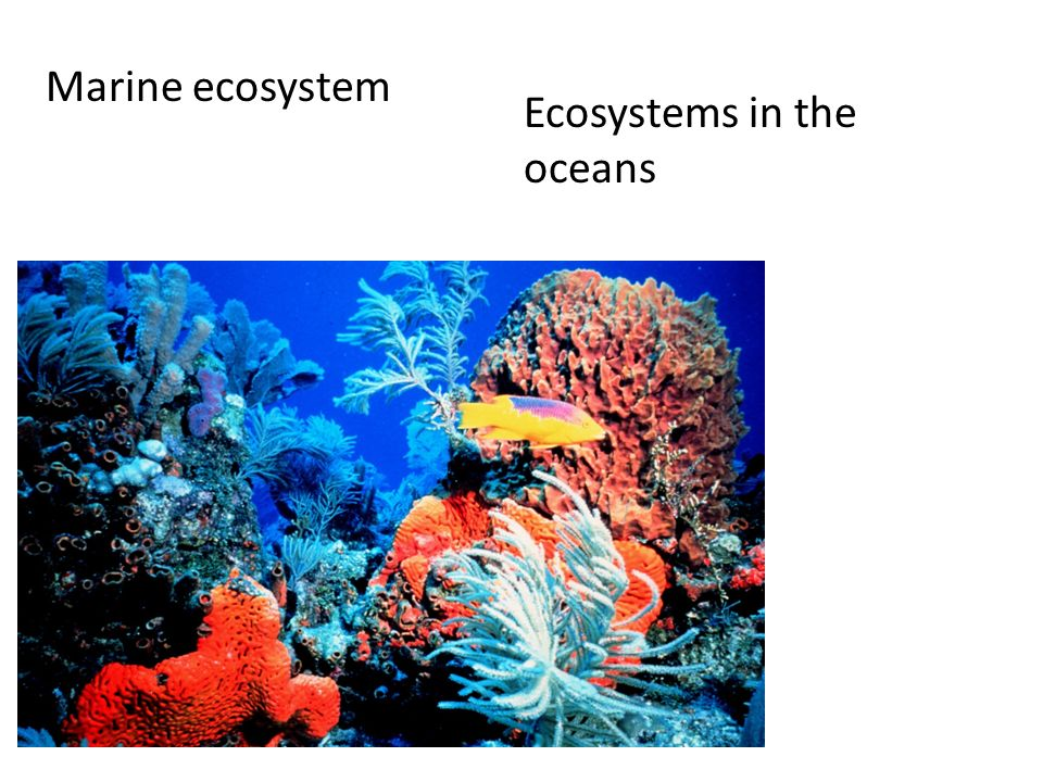 Marine ecosystem Ecosystems in the oceans