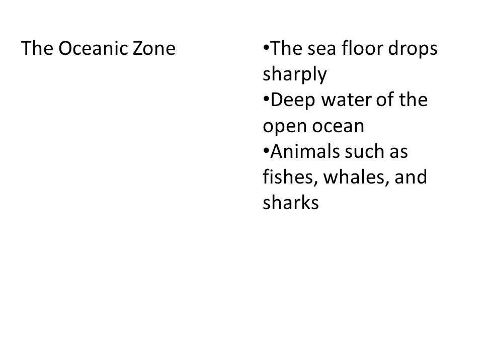 The benthic Zone The ocean floor Deepest parts don't get any sunlight Animals have adaptations to live in the deep parts of this zone Organism get food by eating materials that sink Bacteria get energy from thermal vents