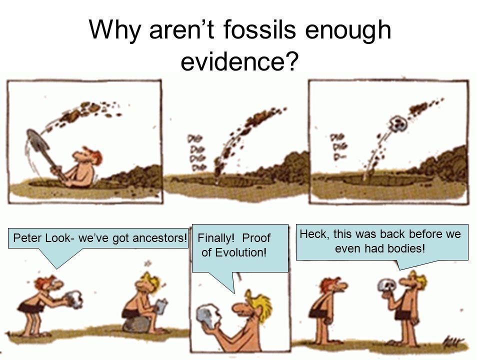 Evidence Of Evolution Worksheet : Sandropainting.com