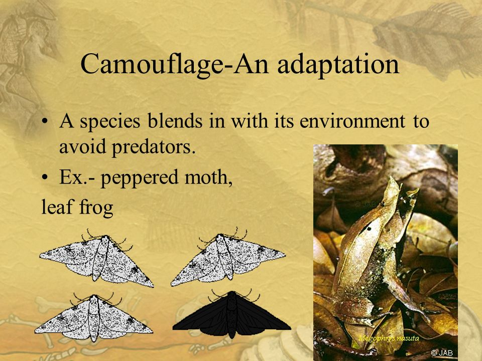 22 Camouflage-An adaptation A species blends in with its environment to avoid predators.