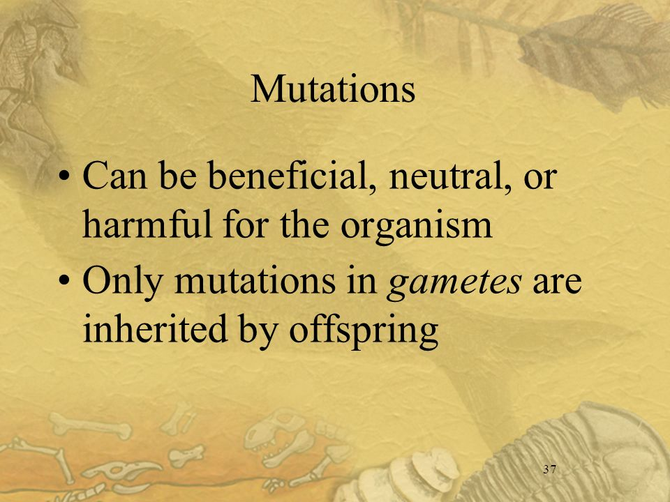 37 Mutations Can be beneficial, neutral, or harmful for the organism Only mutations in gametes are inherited by offspring