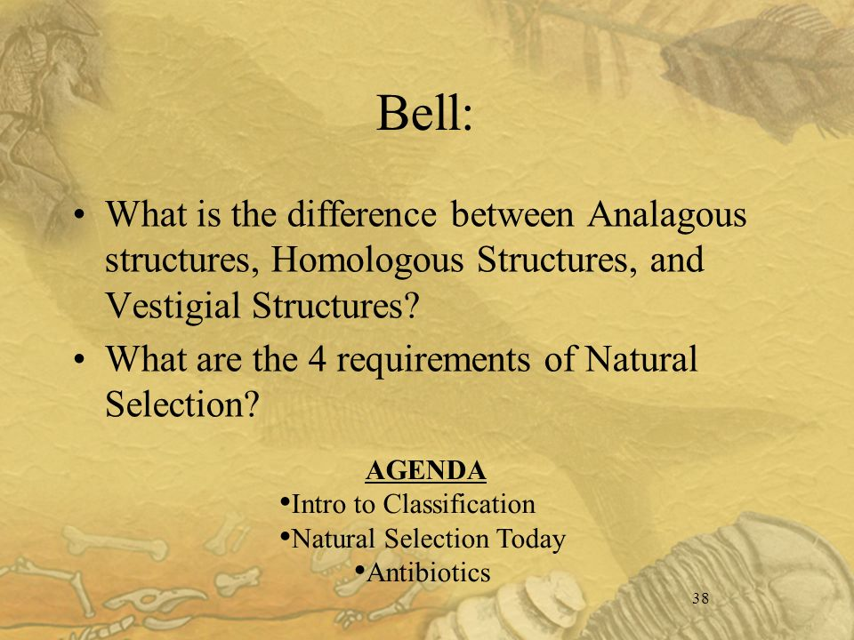 38 Bell: What is the difference between Analagous structures, Homologous Structures, and Vestigial Structures.