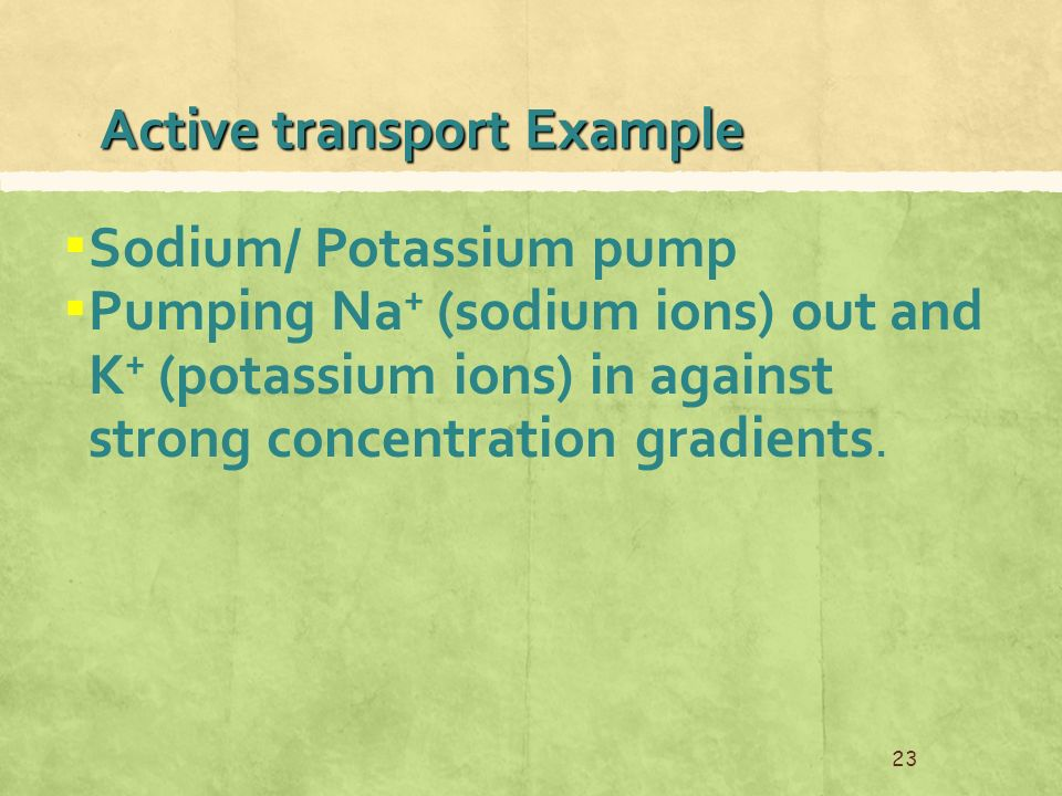 Active transport Example ▪ Sodium/ Potassium pump ▪ Pumping Na + (sodium ions) out and K + (potassium ions) in against strong concentration gradients.