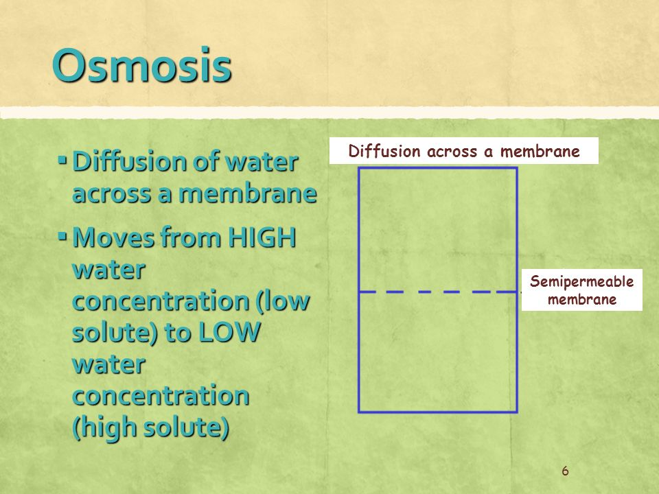 Osmosis ▪ Diffusion of water across a membrane ▪ Moves from HIGH water concentration (low solute) to LOW water concentration (high solute) 6 Diffusion across a membrane Semipermeable membrane
