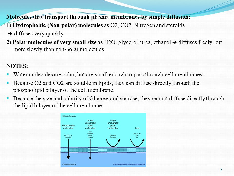 Molecules that transport through plasma membranes by simple diffusion: 1) Hydrophobic (Non-polar) molecules as O2, CO2, Nitrogen and steroids  diffuses very quickly.