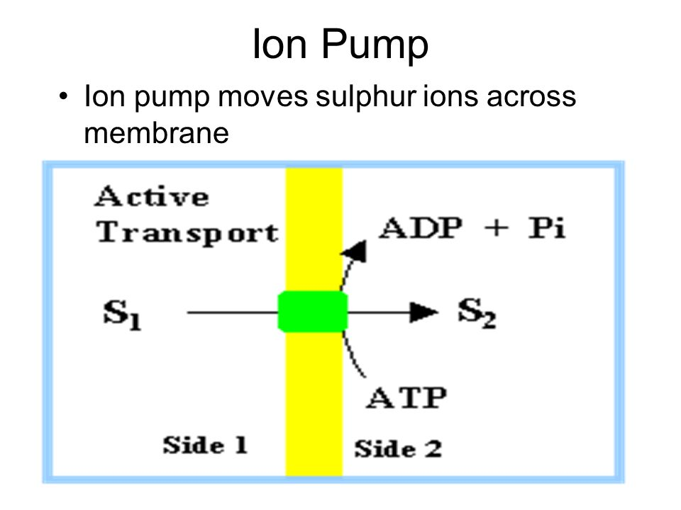 Ion Pump Ion pump moves sulphur ions across membrane
