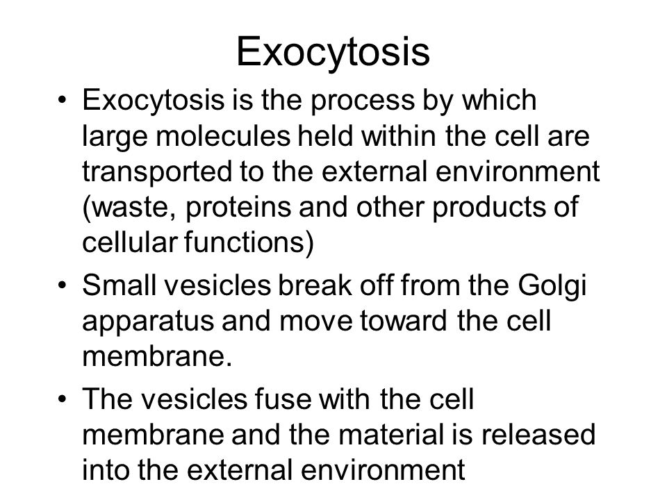Exocytosis Exocytosis is the process by which large molecules held within the cell are transported to the external environment (waste, proteins and other products of cellular functions) Small vesicles break off from the Golgi apparatus and move toward the cell membrane.