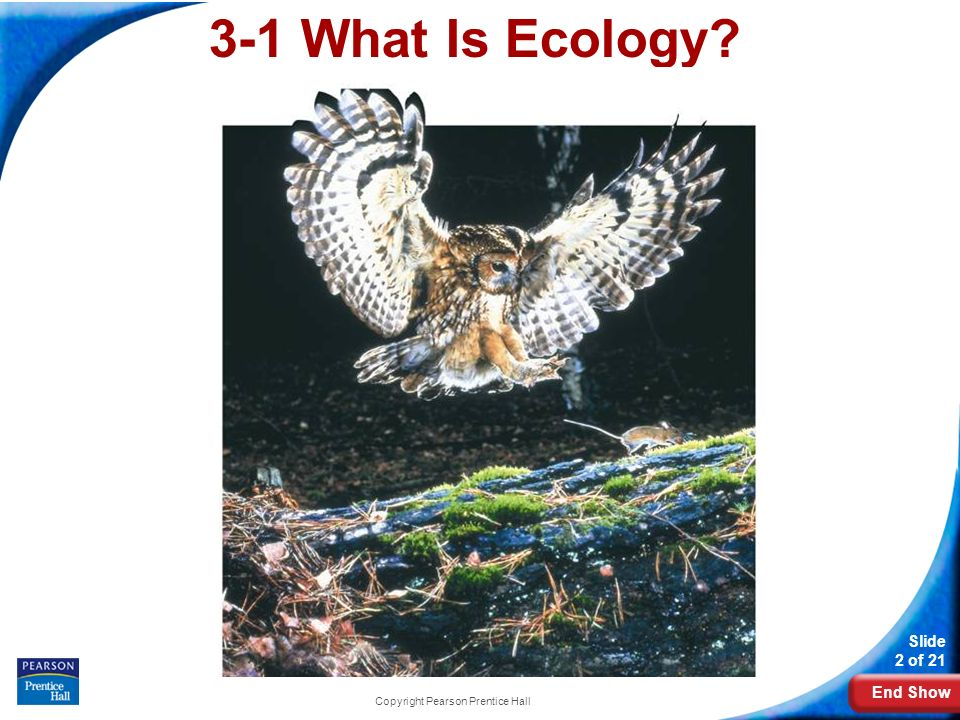 End Show Slide 2 of 21 Copyright Pearson Prentice Hall 3-1 What Is Ecology