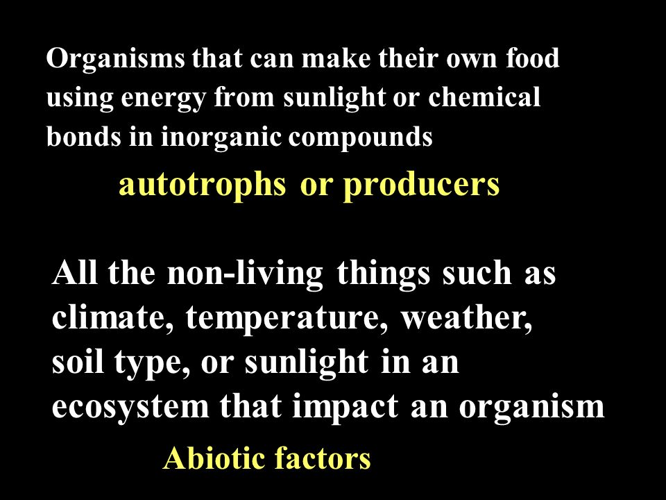 Organisms that can make their own food using energy from sunlight or chemical bonds in inorganic compounds autotrophs or producers All the non-living things such as climate, temperature, weather, soil type, or sunlight in an ecosystem that impact an organism Abiotic factors