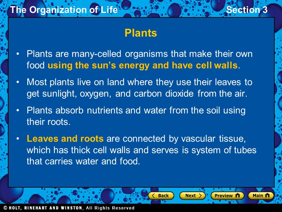 The Organization of LifeSection 3 Plants Plants are many-celled organisms that make their own food using the sun's energy and have cell walls.