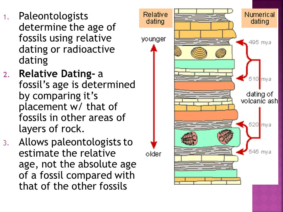 What techniques do relative hookup used to place fossils