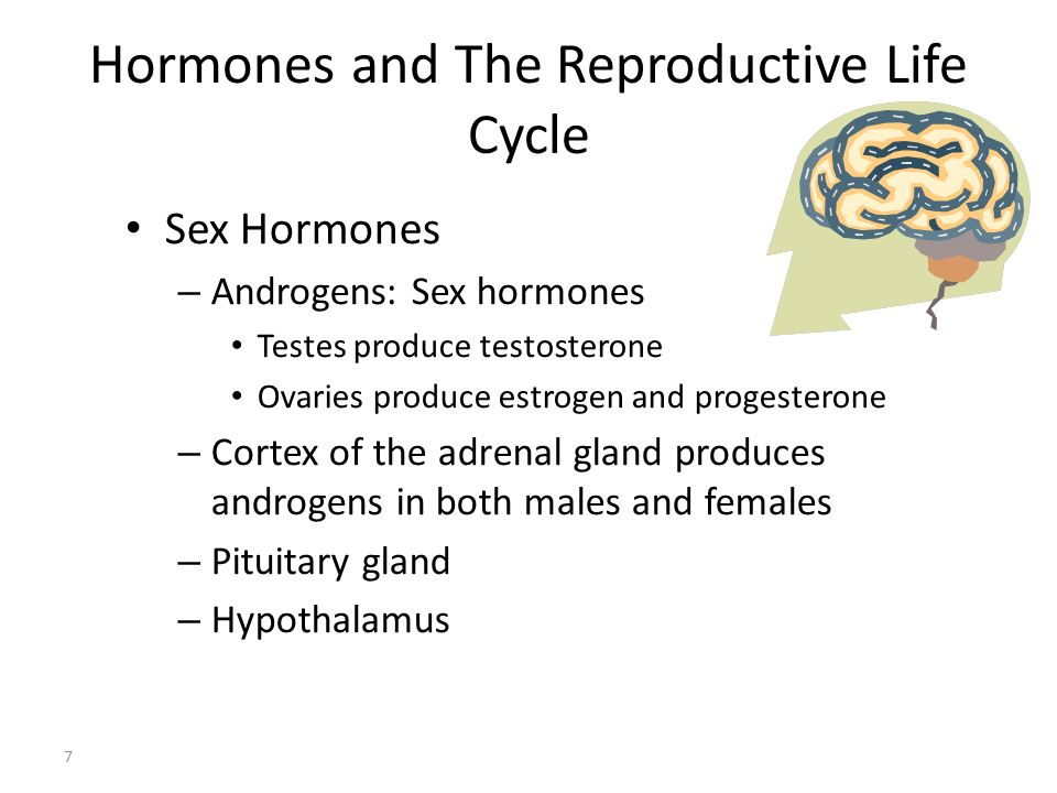 Hormones and The Reproductive Life Cycle 7 Sex Hormones – Androgens: Sex hormones Testes produce testosterone Ovaries produce estrogen and progesteron