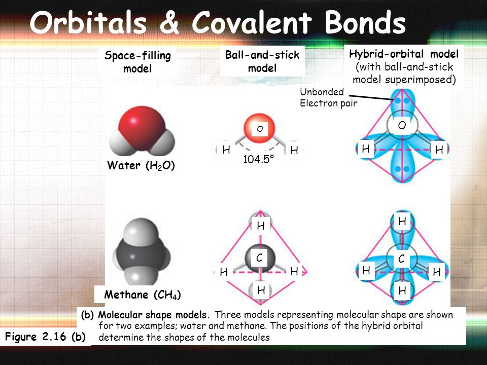 38 Orbitals & Covalent Bonds Space-filling model Hybrid-orbital model (with ball-and-stick model superimposed) Unbonded Electron pair 104.5° O H Water (H 2 O) Methane (CH 4 ) H H H H C O H H H C Ball-and-stick model H H H H (b) Molecular shape models.